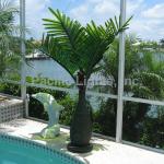 bottle-palm