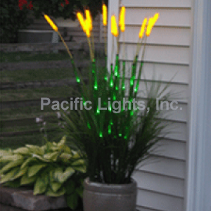 Wheat Grass | Products | Pacific Lights Inc.
